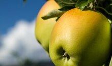 Nalser Apfelwochen