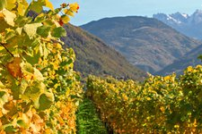 Autumn on the Wine Route