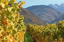 Herbst an der Weinstraße